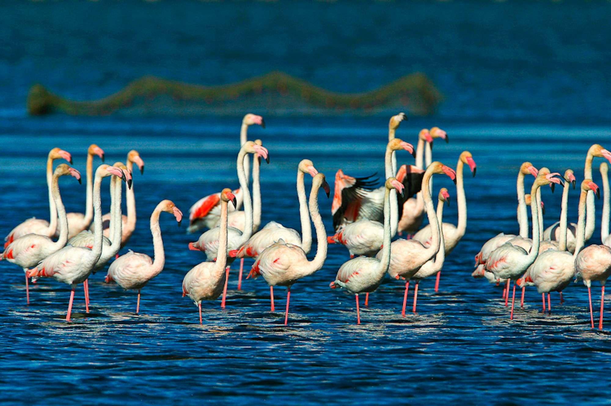 Viaje fin de curso a Delta del Ebro Inmersión Lingüística